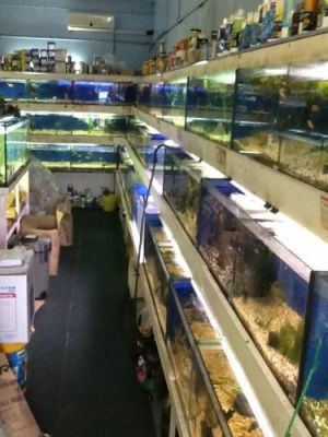 Clearwater Aquariums - Accommodation Cooktown