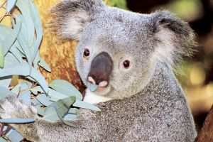 Perth Zoo General Entry Ticket and Sightseeing Cruise - Accommodation Cooktown