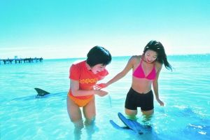 Monkey Mia Dolphins  Shark Bay Air Tour From Perth - Accommodation Cooktown
