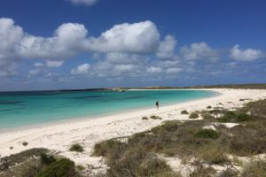Abrolhos Island Half Day Fly and Flipper - Accommodation Cooktown