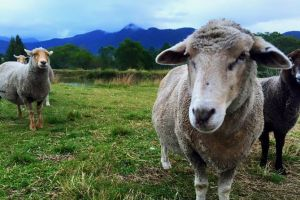 Trevena Glen Farm Animal Experience - Accommodation Cooktown