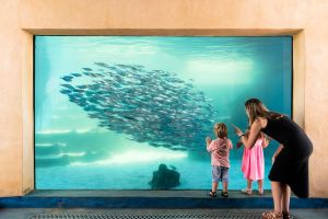AQWA the Aquarium of Western Australia - Accommodation Cooktown